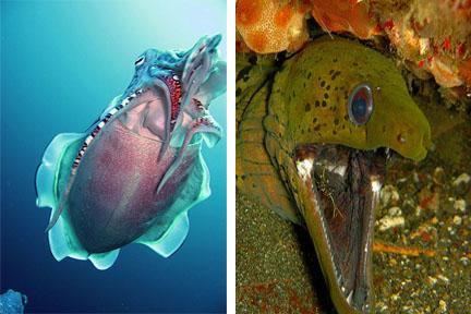 cuttlesfish eel-2.jpg