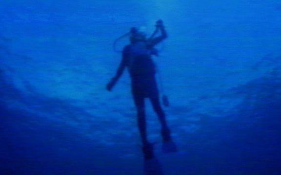 diver_back-3.jpg